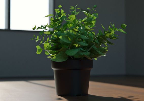 Decoration Plant