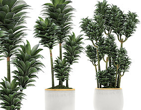 3D Dracena Compacta in a flowerpot for interior design 533