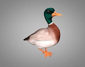 Duck or Drake 3D asset