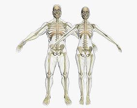 Central Nervous System with Skeleton Combo 3DSmax
