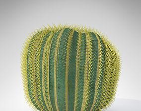 3D model Barrel Cactus