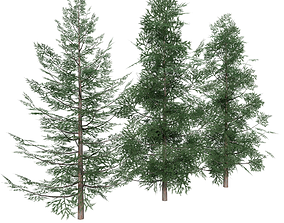 3D asset Forest Conifer Spruce Tree