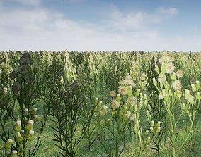 3D model photorealistic grass