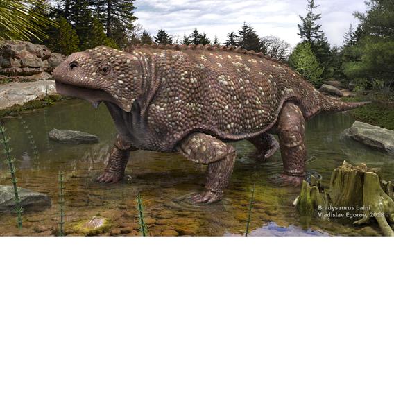 Bradysaurus baini