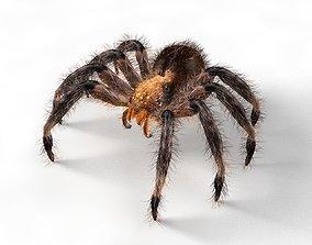 3D asset Tarantula Spider Rigged