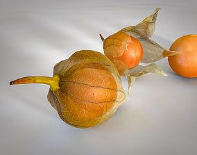 3D asset Physalis peruviana