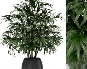 Plants collection 170 3D