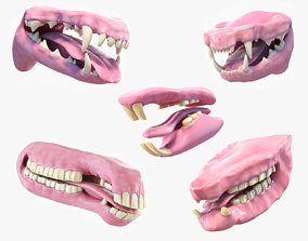 Animal Mouth Collection 3D