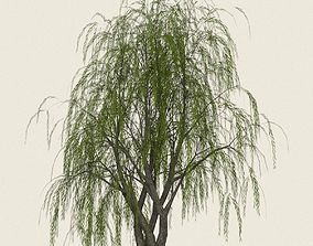 3D asset Game Ready Willow Tree 11