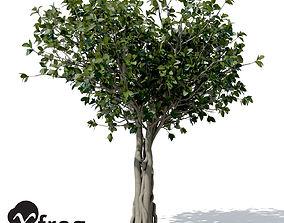 XfrogPlants Banyan 3D