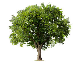 3D forest tree free