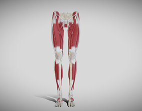Female lower limb anatomy 3D model