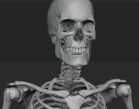 3D Male skeleton sculpt