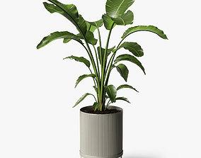 strelitzia plant pot 3D
