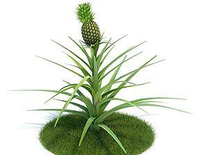 3D model Green Ananas Comosus Plant