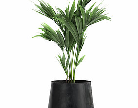 3D model Decorative palm in a Flowerpot for the interior