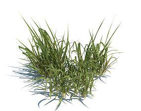 Bunch Of Grass 3D