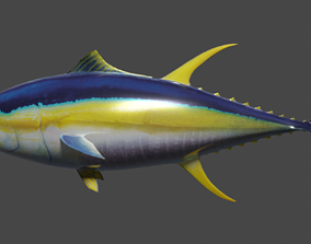 Yellowfin Tuna Rigged Hi and Low Poly Versions 3D model