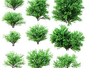 3D model Set deciduous shrubs 10 species