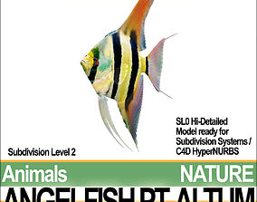 Angelfish Pt Altum 3D