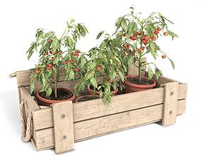 3D model Tomato Plants in Wooden Case