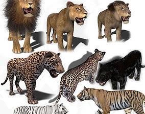 animated leopard Unique Feline Pack - 3d lion model