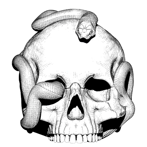 Skull art model. High detailed 3d model. Black&White illustration