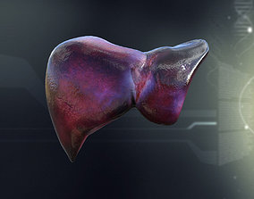 character 3D model Human Liver Anatomy