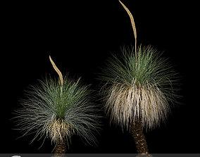 3D model Xanthorrhoea Arborea