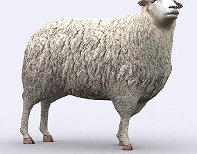 animated 3DRT - Sheep