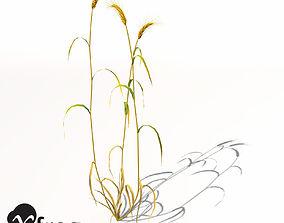 3D model XfrogPlants Barley