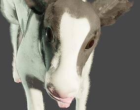 calf cow baby 3D asset