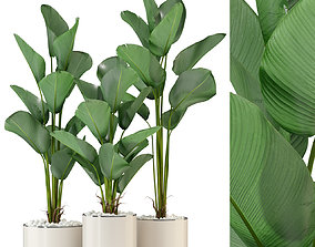 Plants collection 323 3D model