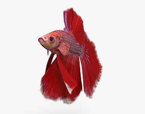 Betta Fish HD 3D