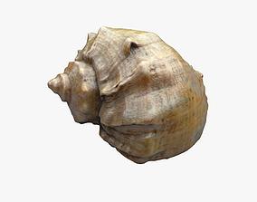 Seashell 3D model
