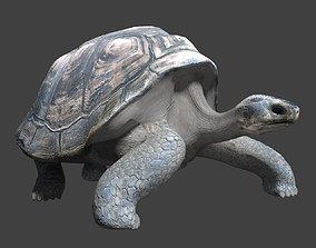 3D model animated Giant tortoise