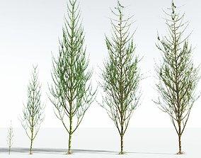 EVERYPlant Ridged Horsetail Tree EXT --24 Models--