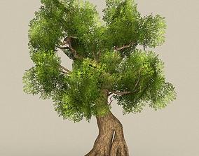 3D asset Tree 08