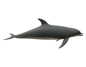 3D asset animated game-ready dolphin