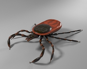 Tick rigged 3D