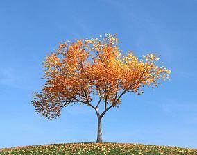 Fall Leaf Tree 3D model