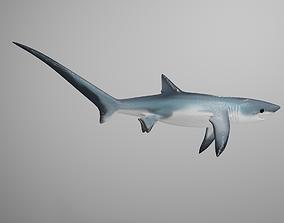 3D asset Thresher Shark