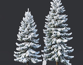 Spruce Nr 6 Two sizes H8-10m Modular branches 3D