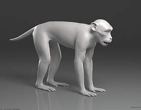 macaque Rhesus Macaque Monkey - Highpoly Sculpture 3D