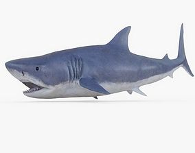 3D asset game-ready Great White Shark 01 Rigged