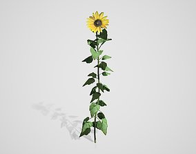 3D asset rigged Sunflower