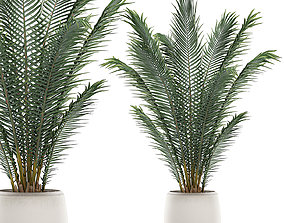 3D model Decorative palm in a white flowerpot for 2