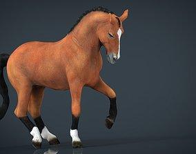 3D asset Dressage Horse