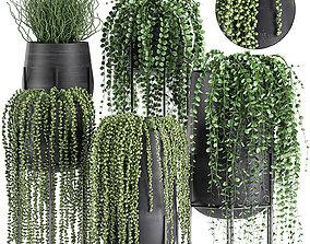 Succulents in a flowerpot for interior design 549 3D model
