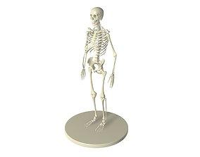 3D skeletON full